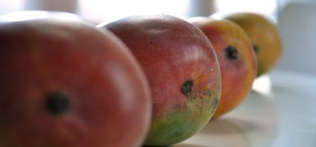 An image of a line of mangoes