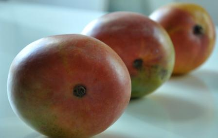 An image of ripe mangoes