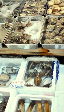 An image of live clams and oysters in boxes of water