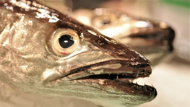 An image of fish at la Boqueria
