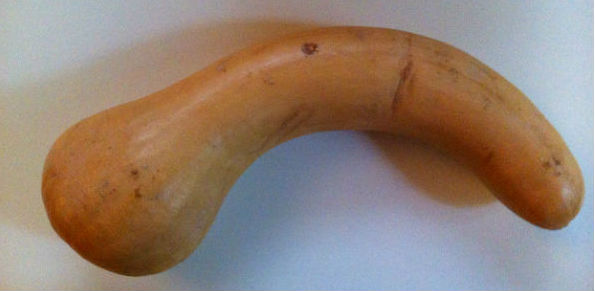 Amusing shaped butternut squash